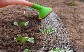 Що садити після капусти на городі Після чого саать капусту у відкритому грунті Таблиця сівозміни
