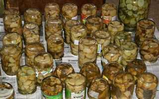 Закачування грибів на зиму в банки — рецепти солоних і маринованих грибів, заготівля білих, відео