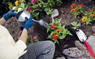 Застосування добрив для садових квітів навесні і влітку, відео