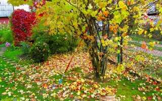 Жовтень саду- збір пізнього врожаю, підготовка дерев до зими, відео