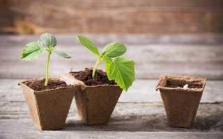 Місячний календар посіву овочів в квітні. терміни посіву