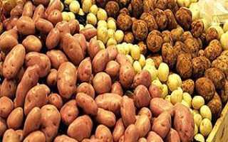 Фото і опис популярних сортів картоплі + відео