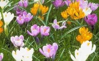 Багаторічні квіти для дачі та саду квітучі все літо — каталог з назвою і фото