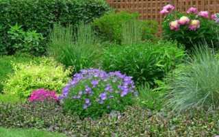 5 найбільш невибагливих багаторічників для палісадника, квітучих навесні. Назва, сорти, опис, догляд, фото