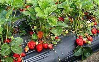 Посів насіння полуниці на розсаду — відео