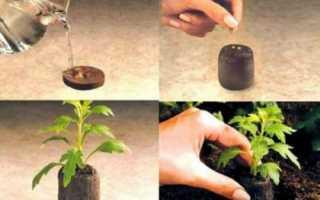 Як садити насіння в торф'яні таблетки, їх переваги, відео