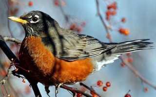 Птахи в саду, як залучити на ділянку пернатого помічника, відео