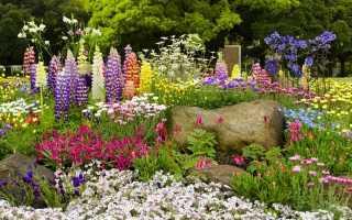 10 найвибагливіших багаторічних квітів. Назви, описи, види, фото