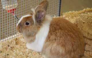 Кролі — профілактики і лікування кокцидіозу у кроликів, відео