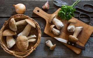 Заготівля білих грибів на зиму — сушка, маринування, соління, відео
