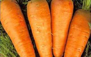 Вибір сортів і різні способи посадки моркви на Уралі + відео