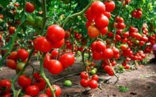 Яку розсаду посадити в березні — квіти, овочі, догляд