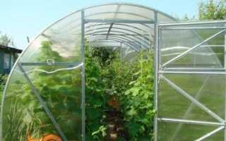Вирощування огірків в теплиці з полікарбонату — ранній урожай