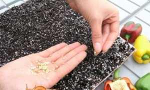 Коли і як садити перець на розсаду в 2019 році за місячним календарем