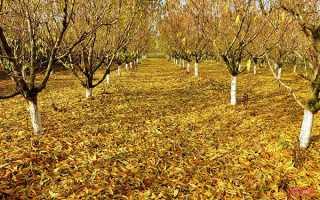 Листопад — роботи в саду, обрізка, підживлення і підготовка до зими дерев, відео