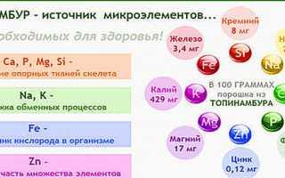 Топінамбур- корисні властивості, правила вживання, відео