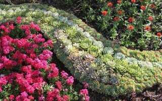Седум квітка. Опис, особливості, види і догляд за седумов