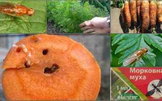 Методи боротьби з морквяної мухою на городі — біопрепарати, відео