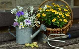 Місячний календар посіву квітів в червні. Терміни посіву. фото
