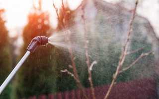 Залізний купорос для захисту саду від хвороб і шкідників. Особливості використання. фото