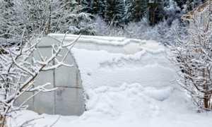 Місячний посівний календар на грудень 2018 для садівників, городників, квітникарів