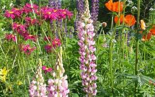 ТОП 30 невибагливих довгоквітучі багаторічників кольорів для саду і дачі, фото, відео