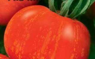Низькорослі томати для теплиці: огляд найбільш врожайних сортів, особливості вирощування