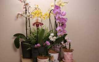 Чи можна садити орхідею в непрозорий горщик, відео