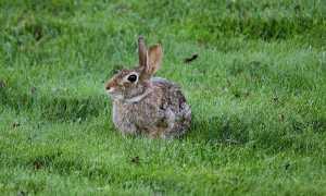 Як позбутися від зайців на дачі, відео