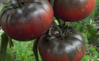 Томат Чорний Крим: характеристика і опис сорту, як вирощувати