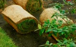 Рулонний газон — вибираємо, укладаємо, відео