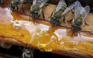 Весняна підгодівля бджіл цукровим сиропом, терміни проведення, бджоли навесні, відео