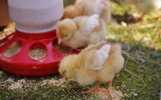 Комбікорм для курчат Старт, Сонечко, ПК 5, ціна, виготовлення комбікорму своїми руками, відео