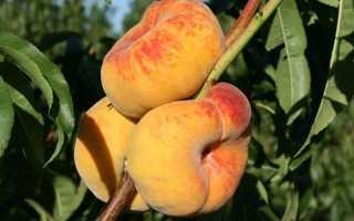 Чим краще підгодує персик навесні
