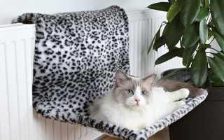 Гамак для кішки на батарею своїми руками, моделі гамака на вікно, відео