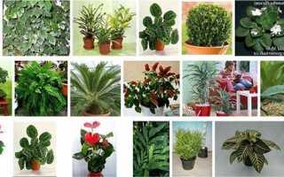 Тіньолюбні кімнатні рослини — правила підбору для вирощування вдома, відео