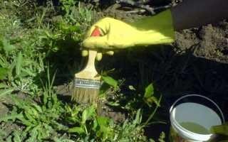 Знищуємо бур'яни на городі народними способами, відео