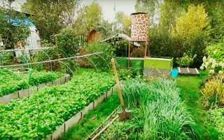 Сидерати на городі, час посіву, способи забивання восени, відео