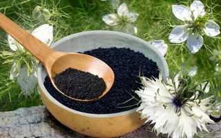 Застосування масла чорного кмину при ангіні, кашлі, застуді, відео