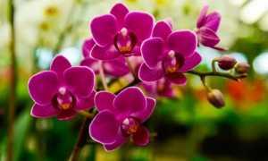 «Амінозол для орхідей» — рідке органічне добриво з повним комплексом амінокислот