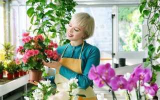 Де купувати кімнатні рослини? Особливості покупки кімнатних рослин. фото