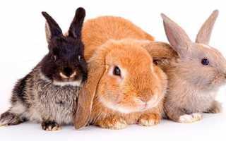 Кролики — добірка коротких запитань-відповідей!