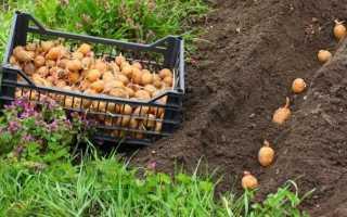 Місячний календар посіву овочів в травні. терміни посіву
