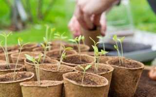8 важливих овочів, вирощуваних розсадою