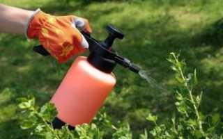 Обприскування винограду від хвороб і шкідників: коли і як проводити обробку, препарати та народні засоби