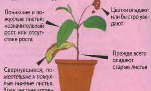 Обприскування кімнатних рослин: основні правила, ніж можна обприскувати