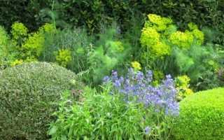 Вплив фітонцидів рослин на наше життя. Що таке фітонциди?