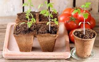 Як виростити розсаду помідорів будинку в 2019-му році: правила догляду і вирощування, правильний посів |