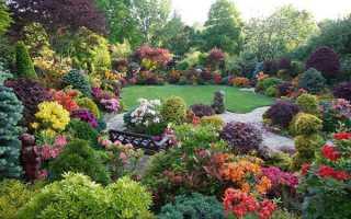 Декоративний чагарник — невибагливі садові весеннецветущие кущі, відео
