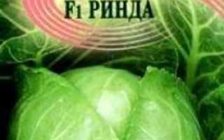Кращі сорти капусти білокачанної з фото і назвою